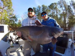 North Carolina Blue Catfish State Record 12/20/15