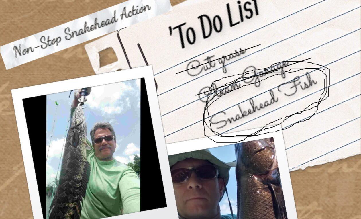 SnakeHead Fishing